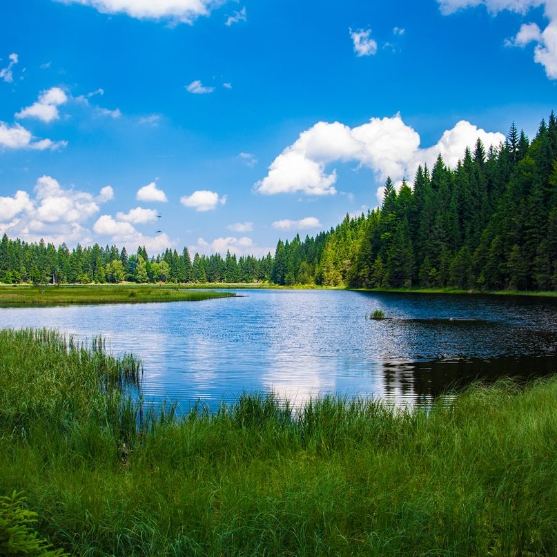 scenic-view-of-lake-in-forest-247600
